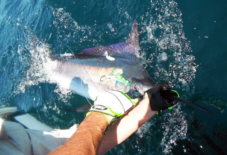 Johno Black Marlin Port Stephens