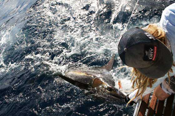 Tommy Black Marlin